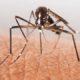 enfermedades por picadura de mosquito en españa